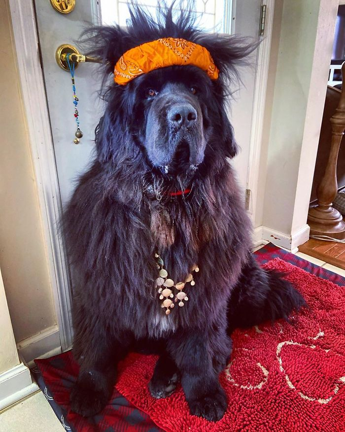 hank the newfoundland dog hairstyles 1 12 5e8acfd665d97 700