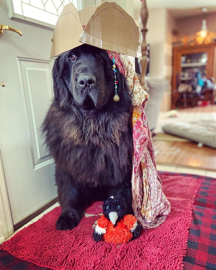 hank the newfoundland dog hairstyles 1 9 5e8acfd0ab850 700